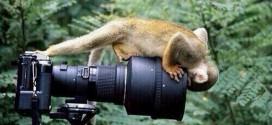 40 fotos de animais batidas no momento exato – Parte II