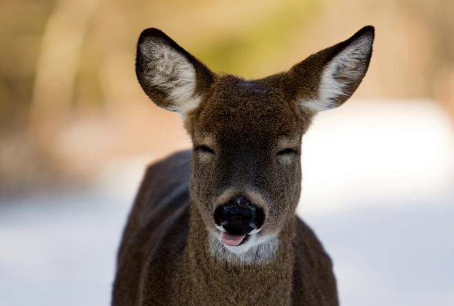 fotos dos animais mais felizes e sorridentes do mundo