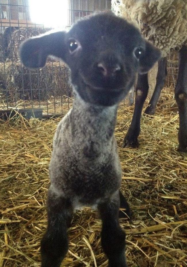 animais felizes facebook mundo 05