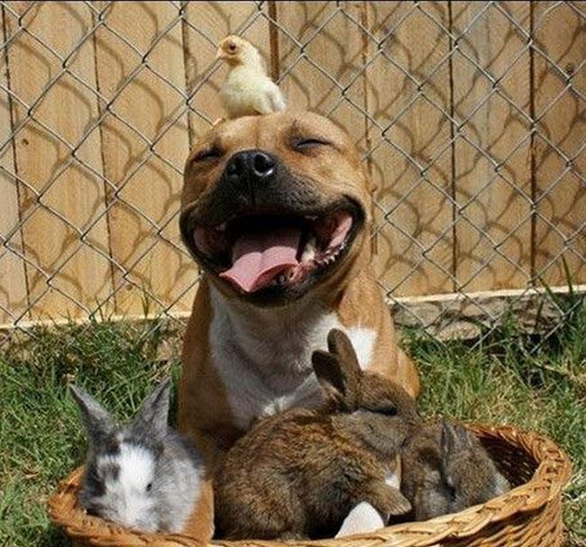 foto de cachorro feliz para facebook sorrindo