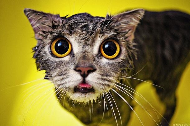 Gatos lindos tomando banho