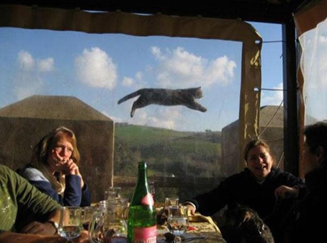 fotobomb animais gato pulando fotos