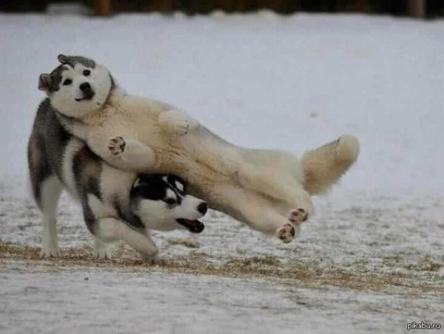 fotobomb cachorros