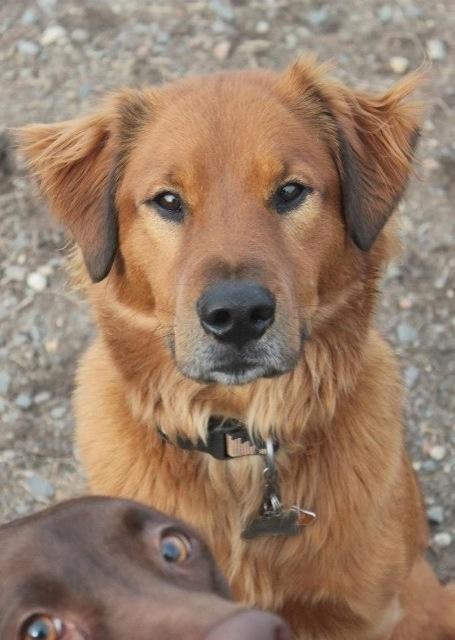 fotobomb dois cachorros