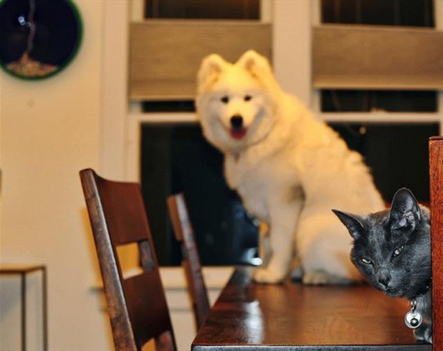 fotos de fotobomb cachorros