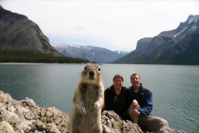 fotos de fotobomb esquilo