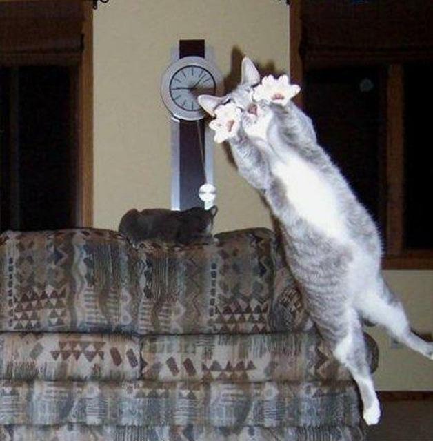 fotos de fotobomb gatos pulando