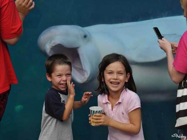 fotos de fotobomb golfinho