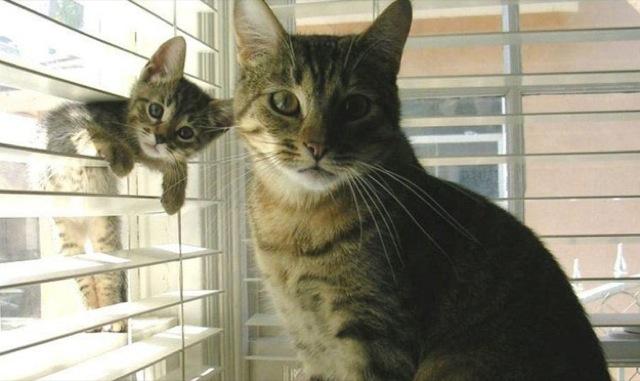 fotos de fotobomb mae e filho