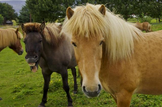 photobomb de cavalo