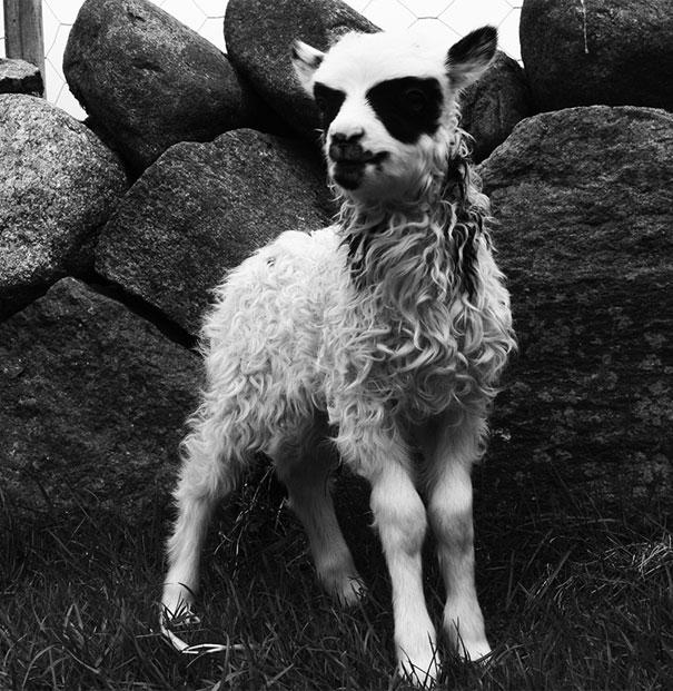 foto de animais bonitos com bigode