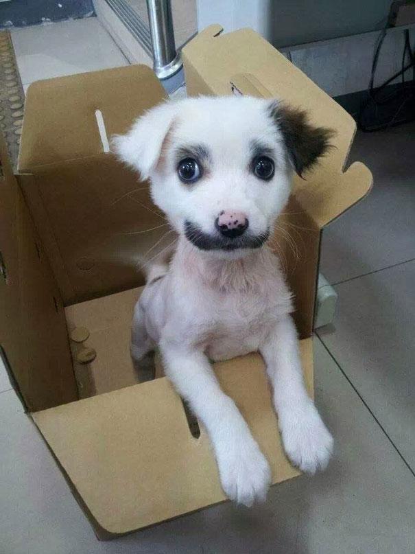 foto de cachorro engracado