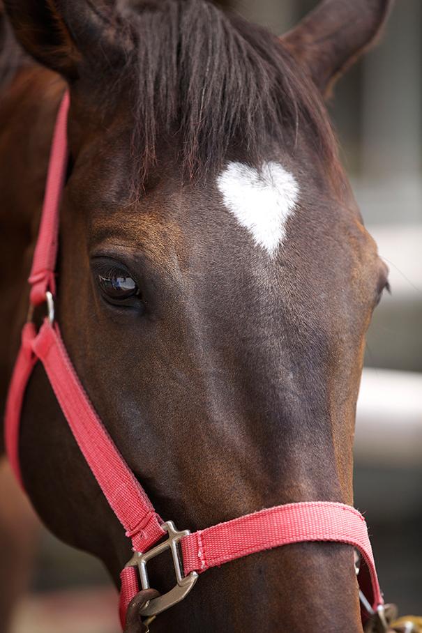 foto de cavalo com coracao na testa