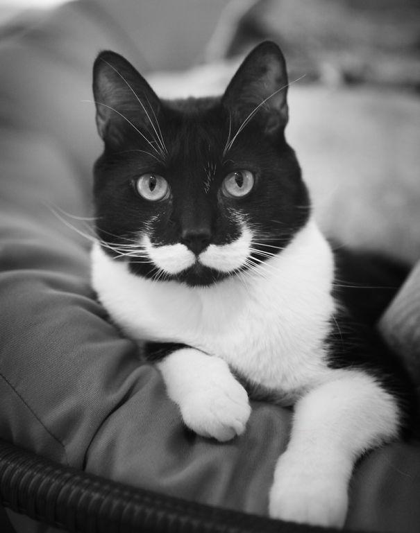 foto de gato com bigodinho