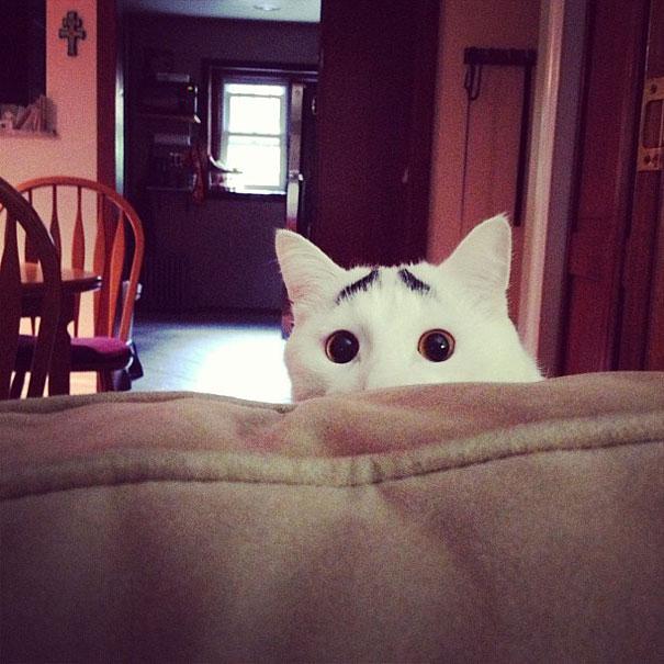foto de gato com olhos de shrek para facebook
