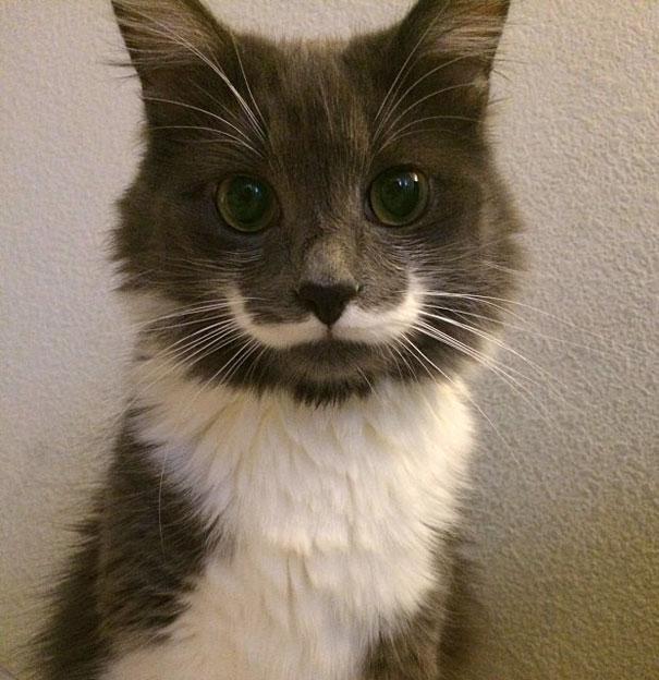 foto de gato engracado para colocar no facebook