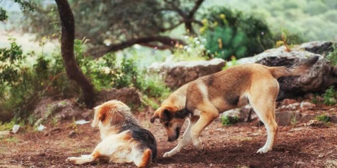 Raça de Cachorro mais Inteligente – CONHEÇA OS 5 MAIS INTELIGENTES!